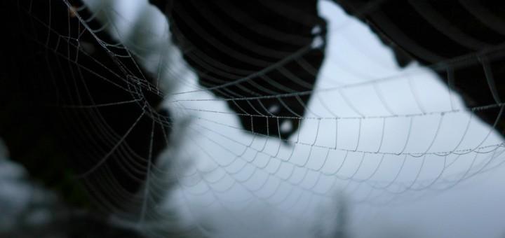 schönen Netze